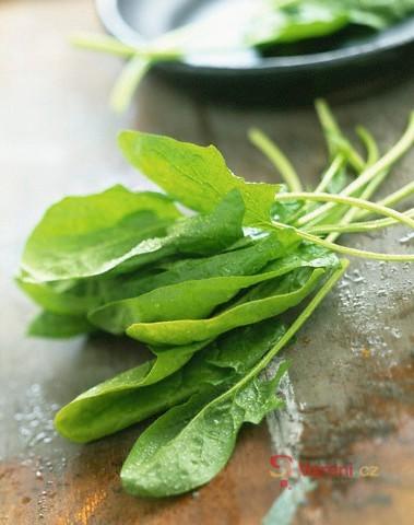 Chlorofyl - zelená našeho života