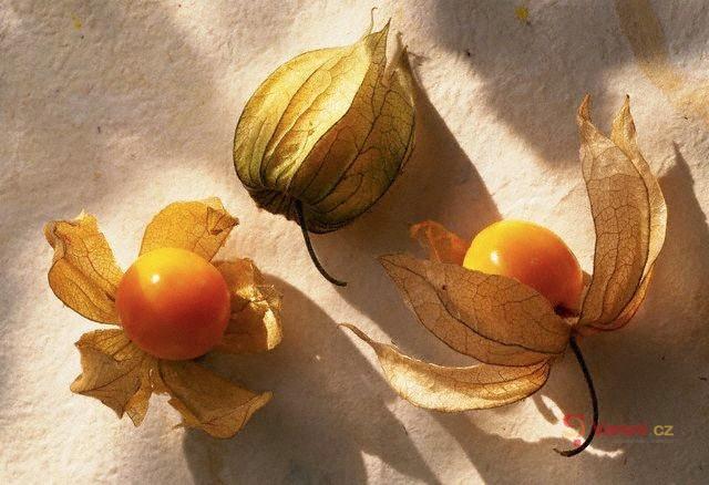 Netradiční ovoce plné vitamínů