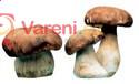 Zajímavosti  o houbách