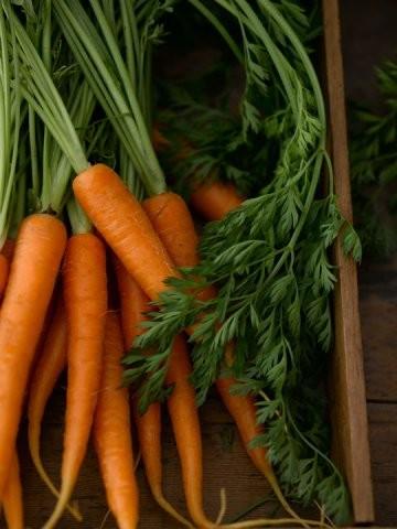 Co s přebytky zeleniny: Zkuste ji zmrazit a uchovat na zimu