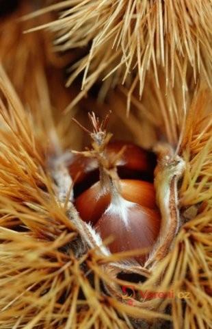 Přírodou proti podzimním splínům