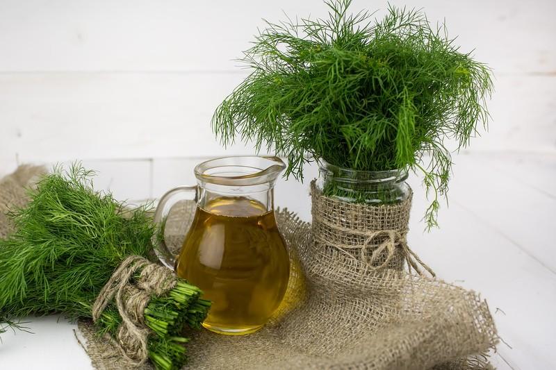 Jak využít voňavý kopr v kuchyni?