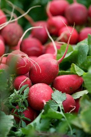 Ředkvičky - nenápadné zeleninové kuličky plné vitamínů