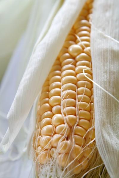 Zpracováváme kukuřičné klasy