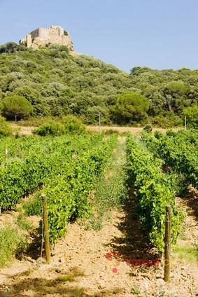 Svatomartinská vína - připijte si mladým vínem z podzimní sklizně