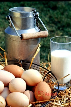Mléko v naší kuchyni 1.díl