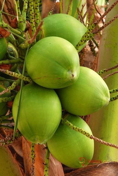 Kokosový olej - na vaření i pro zdravou pleť