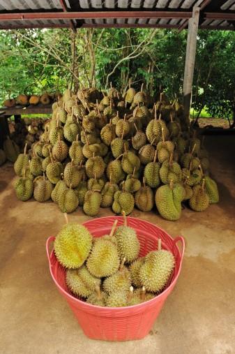Durian, pitahaya a tamarillo: Jaká je jejich typická chuť a jak se konzumují?