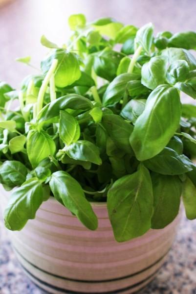Jak si vypěstovat bylinky jednoduše doma