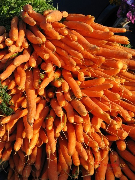 Sezóna farmářských trhů v roce 2013 zahájena!