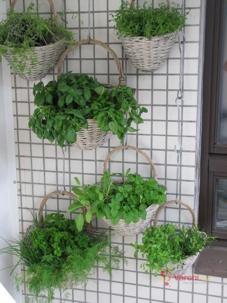 Příprava čerstvých bylinek - krájení, tlučení i zmrazování