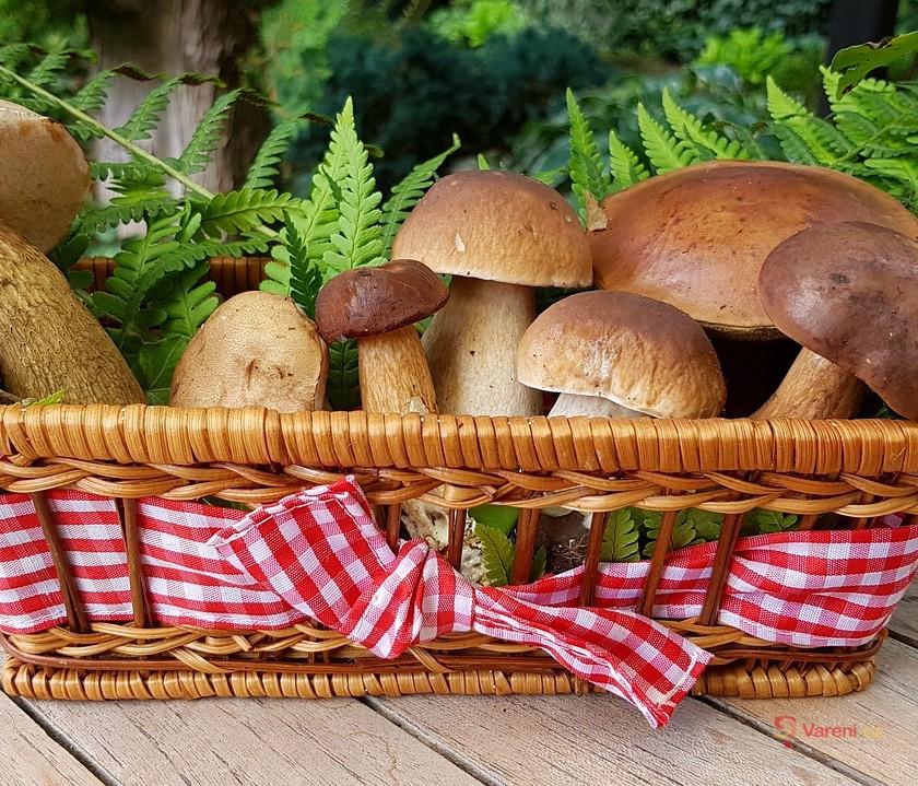 Chuť a vůni hub si nespletete: Houbařská sezóna právě vrcholí!