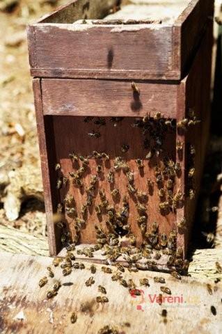 Včelí produkty - mateří kašička