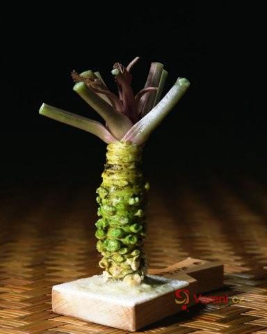 Japonský křen Wasabi