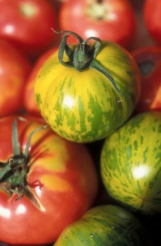Rajčata v receptech: Rajčatové polévky, omáčky i báječné saláty