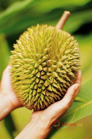 Durian - asijské ovoce