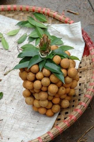 Rambutan a longan - blízcí příbuzní litchi