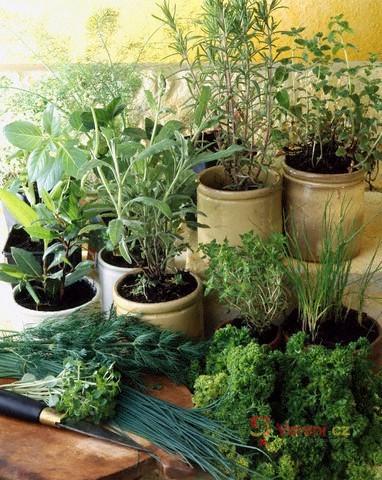 Zázračné bylinky od A do Z 3.díl