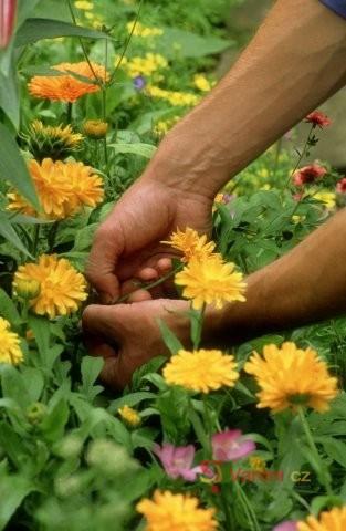 Zázračné bylinky od A do Z 7.díl