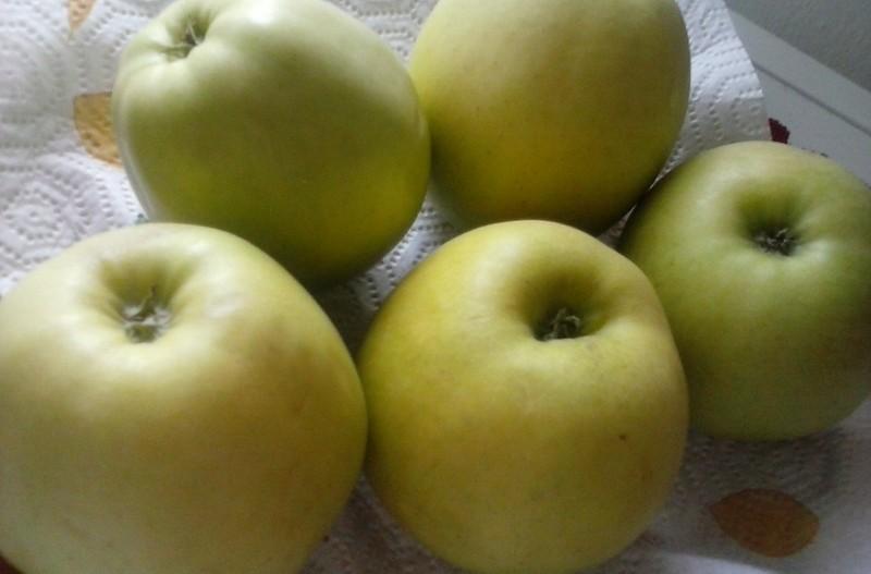 Jablečné placičky s jogurtem
